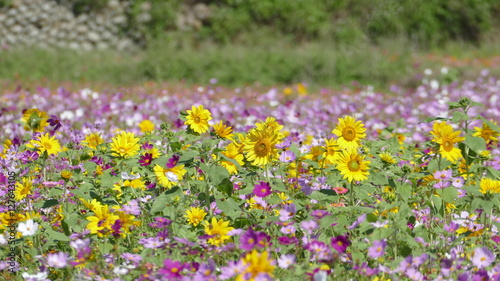 Fototapety, obrazy: flower garden with very nice weather for background