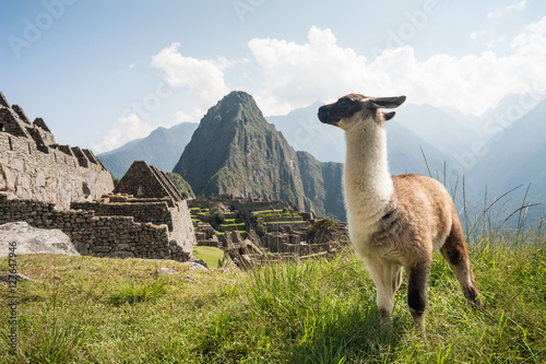 Fotobehang Lama Llama in the ancient city of Machu Picchu, Peru. Overlooking ruins of the Inca citadel in the Andes Mountains and the river valley below.