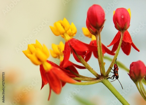 Photo Cute Beadle insect on leaf and flower