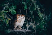 Sleeping Owls