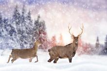 Deer In Winter Forest
