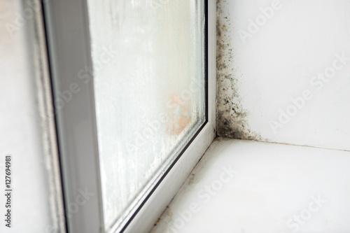 Fotografie, Tablou  fungus on the windows
