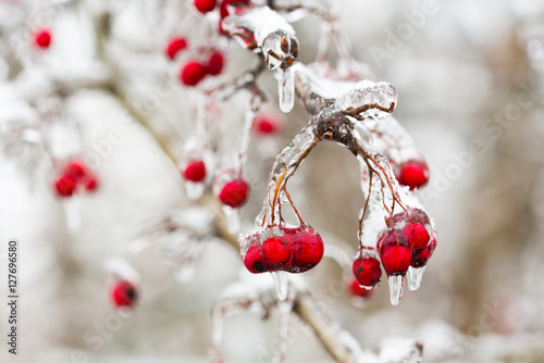 red frozen berries in the ice Wallpaper Mural
