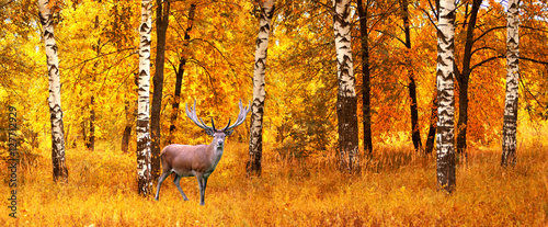 Deurstickers Hert The adult male deer on a background of autumn forest, wildlife