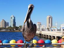 Pelikan In St Pete Beach