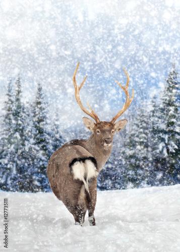 einzelne bedruckte Lamellen - Deer in winter forest (von byrdyak)