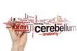 canvas print picture - Cerebellum word cloud