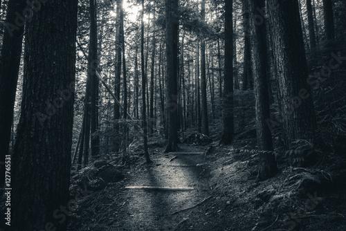 Valokuva  Black and white forest sunlight.