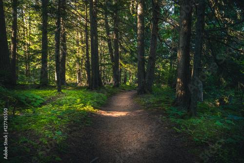 Valokuva  Forest hiking path.