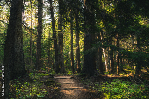 Foto op Canvas Zwart Forest hiking trail.