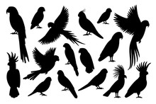 Vector Parrot Silhouettes Of A...
