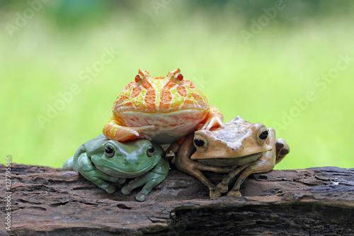 Trio frogs