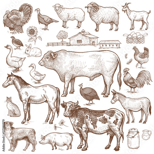 Vector large set farm theme. Animals cattle, poultry, pets, landscape. Objects of nature isolated on white background. Drawings for text illustration, decoupage, design covers, signage, posters.