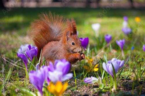 Deurstickers Eekhoorn Cute little squirrel on the meadow with flowers