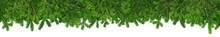Undecorated Empty Green Christmas Xmas Tree Fir Branches Super Wide Panorama Banner Isolated On White Background