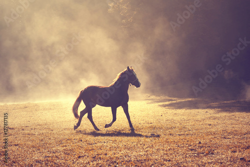 Canvas Prints Horses Beautiful morning sunlight foggy meadow with domestic brown horse.