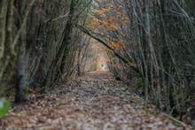 Skogsstig Med Mark Täckt Med Fallna Löv