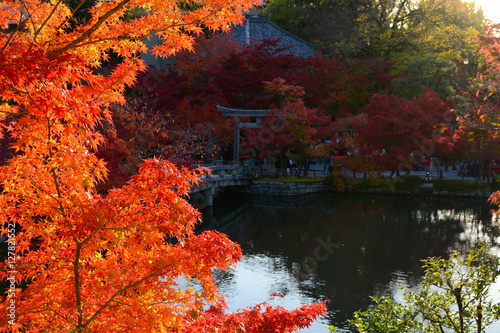 Tuinposter Baksteen Fall maple leaves glowing bright red in the evening autumn sun by a peaceful pond