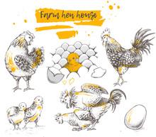 Set Of Farm Chicken Family.