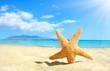 Starfish on the beach. Crete