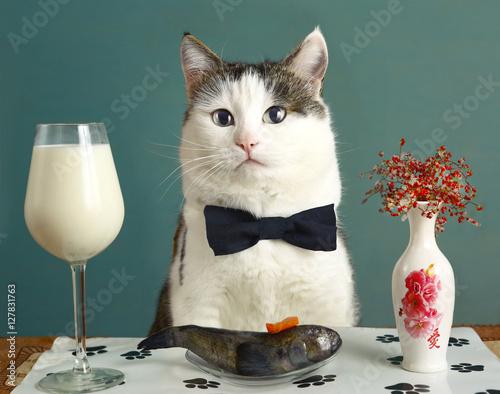 Deurstickers Kat cat in restaurant with milk and raw fish