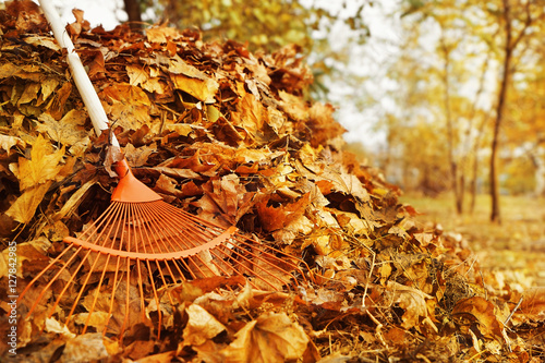fototapeta na drzwi i meble Fan rake and pile of fallen leaves in autumn park, close up view