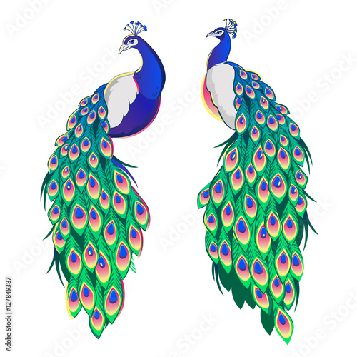 Set of two peacocks isolated on white background. Wall mural