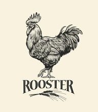 Illustration Of The Cock In Vintage Engraving Style. Rooster Grunge Label. Sticker Image For The Farms And Manufacturing Depicting Rooster. Grunge Label For The Chicken Product.