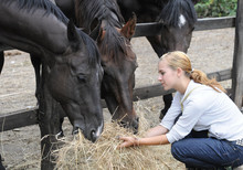 Teenage Girl Feeds Horse