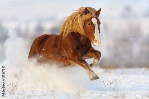 czerwony-kon-z-dluga-blond-grzywa-biegnie-po-snieznym-polu