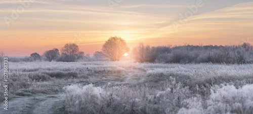 Staande foto Grijs Winter rising sun illuminate white grass with hoarfrost