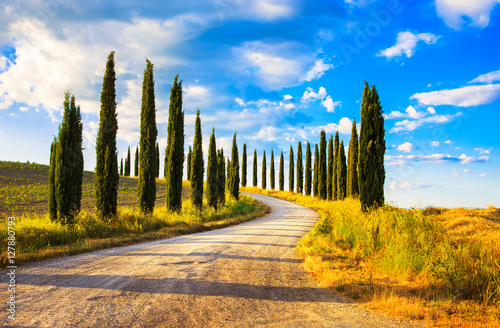 Canvastavla  Tuscany, Cypress Trees white road rural landscape, Italy, Europe