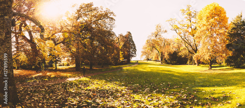 Foto op Plexiglas Landschappen Idyllischer Park im Herbst