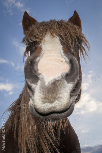 Foto op Canvas Paarden Funny close up horse portrait. Blue sky background with clouds