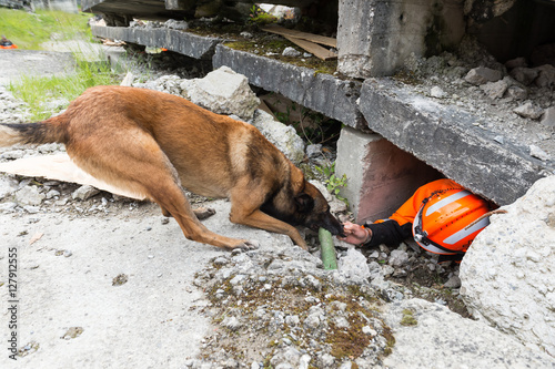 Láminas  chien recherche de victime