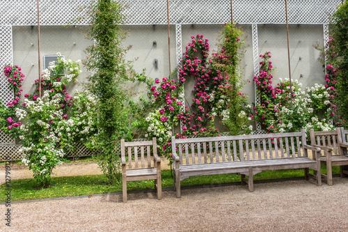 Fototapety, obrazy: Roses in beautiful Albert Kahn Park. Boulogne-Billancourt, Paris