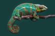Chamäleon (Furcifer pardalis)