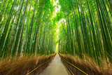 Fototapeta Bambus - Arashiyama bamboo forest in Kyoto Japan