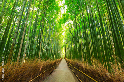 Montage in der Fensternische Bambus Arashiyama bamboo forest in Kyoto Japan