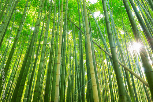 In de dag Bamboo Arashiyama bamboo forest in Kyoto Japan