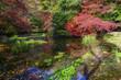 京都 八瀬の紅葉