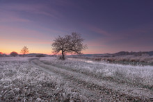 Grass And Falling Leaves With Hoarfrost In Winter Morning