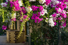 Branches Of Beautiful Pink And...