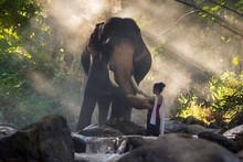 Portrait Of Beautiful Rural Thai Woman Wear Thai Dress With Elephant In Chiang Mai, Thailand