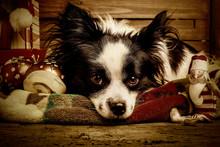 Dogs Christmas Greeting Card
