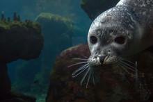 Newborn Puppy Monk Grey Seal C...