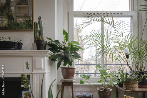 plants next to a window in an apartment in amsterdam