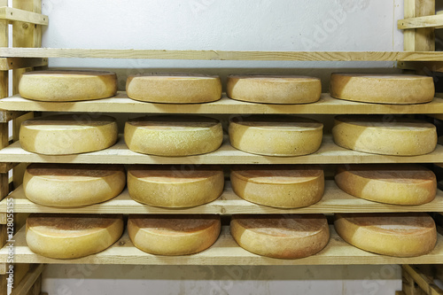 Stack of aging Cheese at maturing cellar dairy Franche Comte