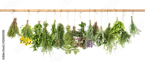 Aluminium Prints Fresh vegetables Fresh herbs hanging Basil rosemary thyme mint dill sage
