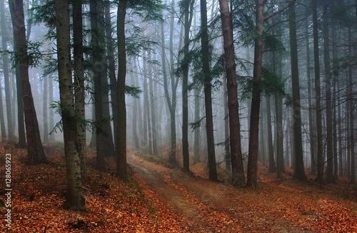 Poranne mgły  - fototapety na wymiar